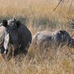 SA, Mozambique join forces to end poaching