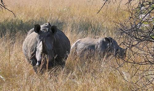 Fight Rhino Poaching