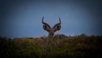 SANParks Kudu Green School Initiative