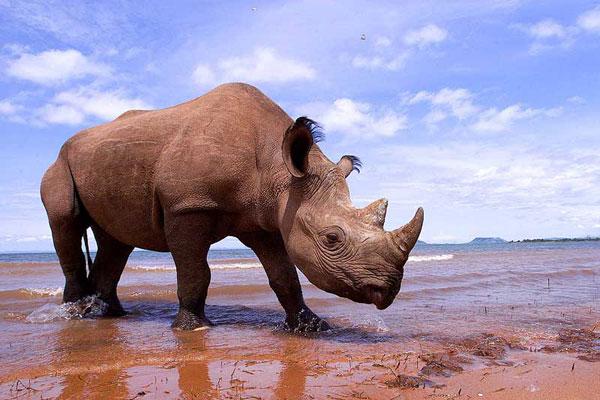 Fight Wildlife Crime