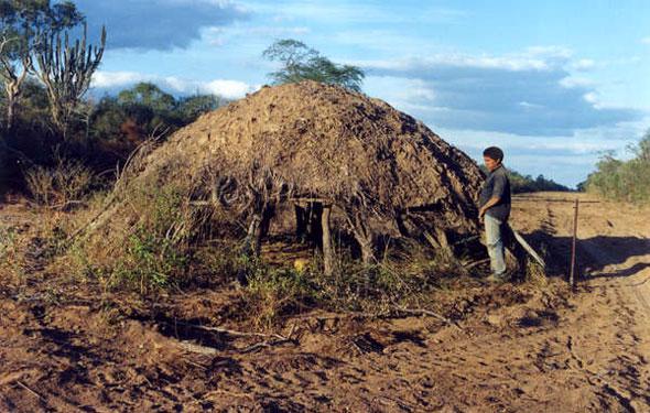 Ayoreo Tribe Hut