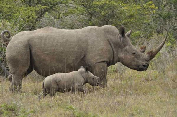 Rhino Poaching - Memorandum of Understanding
