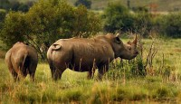 Black rhino plan gazetted