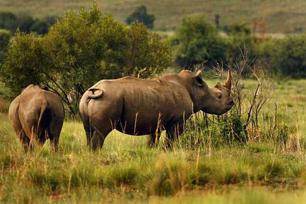 South Africa Rhino Protection