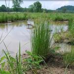 Biodiversity contributes to economy