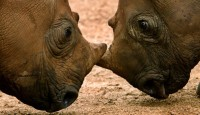 Rhino Fund to assist initiatives
