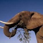 Poached rhino horns returned