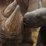 War on rhino poaching receives boost