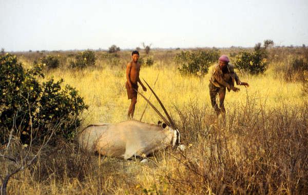botswana - kalahari