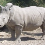 Biodiversity plan for white rhinoceros