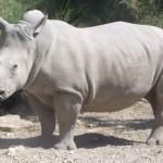 Biodiversity plan for white rhinoceros