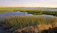 wetlands reserve