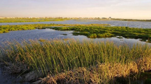Investment to rehabilitate wetlands