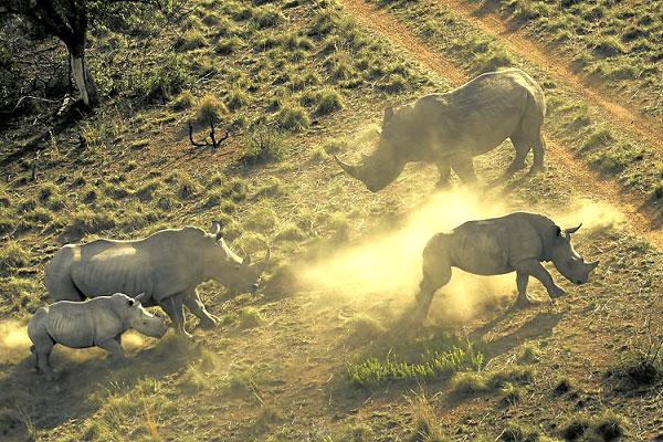 wildlife crime - south africa