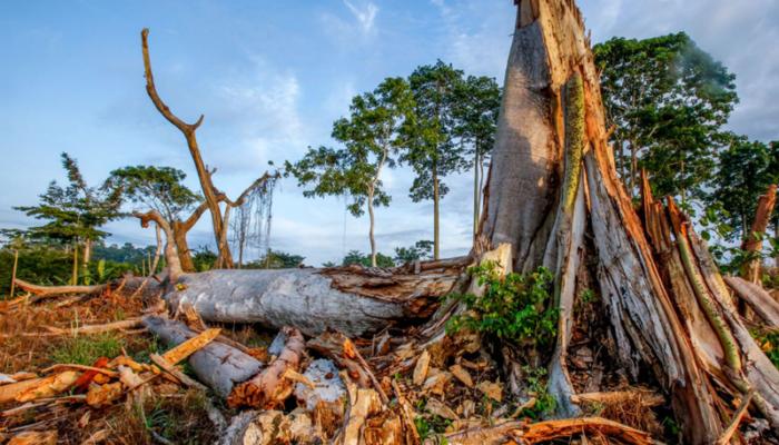 ivory coast - climate change